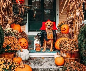 Halloween, autumn, and dog image