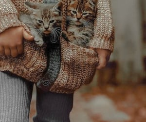 autumn, cat, and kitty image