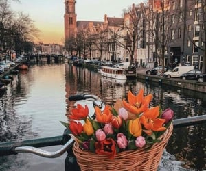 city, amsterdam, and flowers image