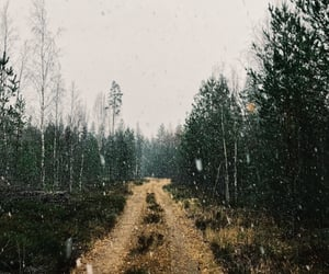 finland, nature, and november image