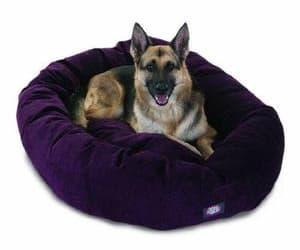 dog bed, doglovers, and selectfurniturestore image