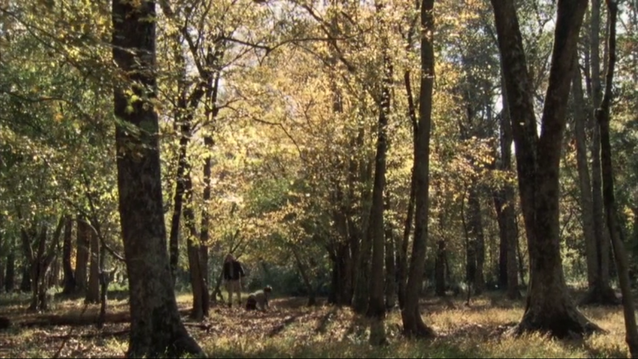 autumn, captive, and forest image