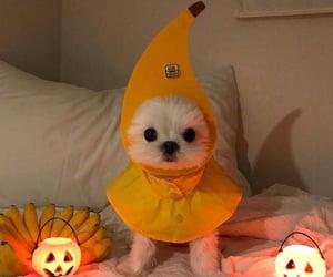 dog and Halloween image