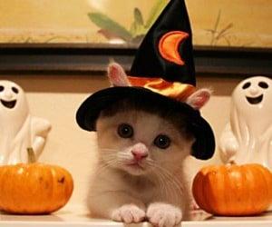 cat, Halloween, and kitten image