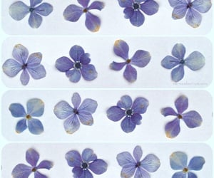 flowers, purple, and violet image