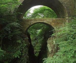 greenery, nature, and scotland image