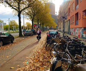 autumn, netherlands, and rotterdam image