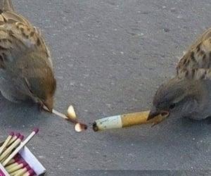 bird, cigarette, and grunge image
