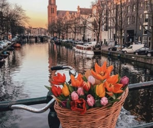 city, flowers, and amsterdam image