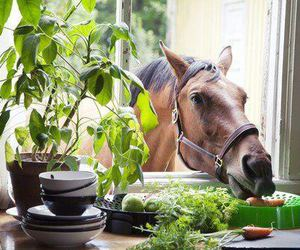 horse and window image