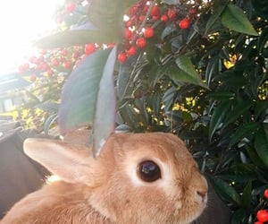 animals, bunny, and aesthetic image