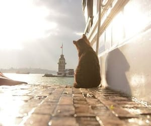 cat, istanbul, and photography image