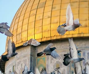 Jerusalem, palestine, and جُمال image