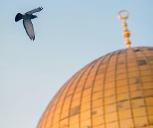 Jerusalem, palestine, and wallpaper image