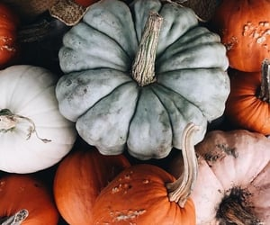 autumn, pumpkin, and decoration image