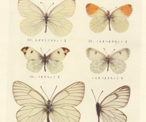 aesthetic, butterflies, and chinese image