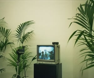 green, tv, and plants image