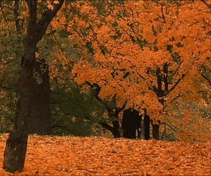 gif, nature, and autumn vibes image