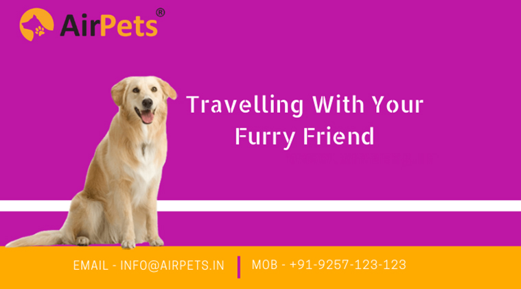 article, domestic pet transport, and pet shipping services image