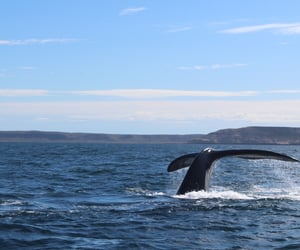 watching, whales, and argentine image