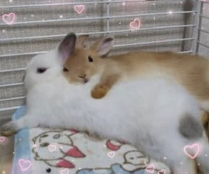 bunny and soft image