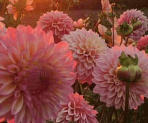 gif, pink, and pink flowers image