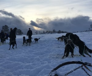 clouds, adventure, and dogs image