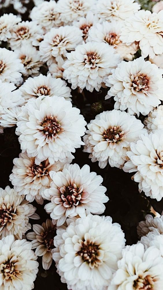 Flowers Flowers Aesthetic Discovered By Sanarahhhh