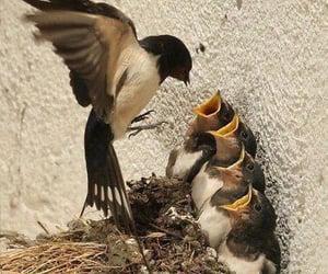 allah, bird, and birds image