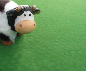 cow and moo image