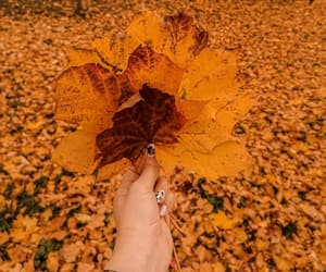 aesthetic, fall, and nails image