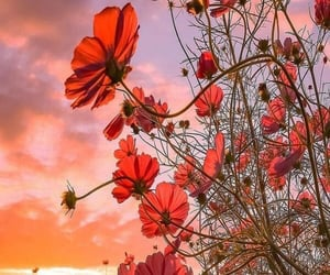 background, clouds, and flowers image