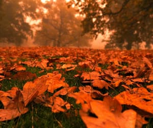autumn, hope, and leaves image