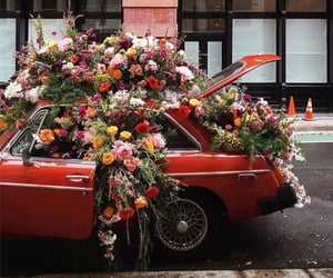 flowers, car, and red image