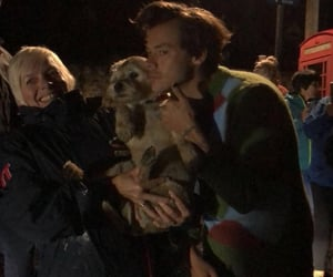 Harry Styles, puppy, and dog image