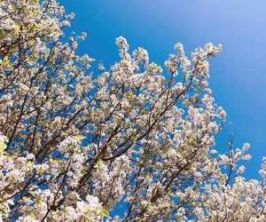 blue, blue sky, and flowers image