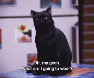 cat, salem, and sabrina image