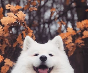 autumn, dog, and animals image