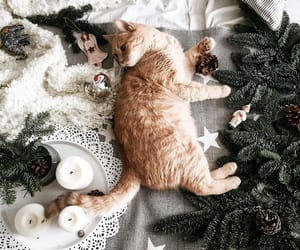 aesthetic, animals, and candles image