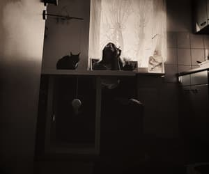 b&w, cats, and girl image