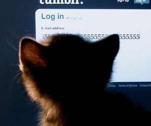 kitten, tumblr, and cat image