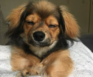 animals, snoozing, and dogs image