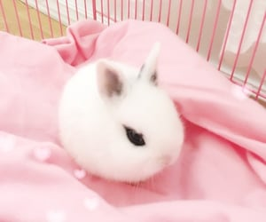 animals, baby bunny, and cute image