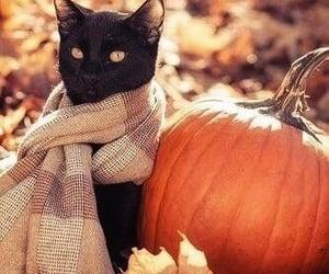 August, autumn, and black kitten image