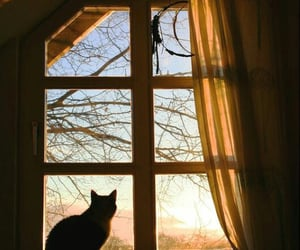 animal, room, and silhouette image