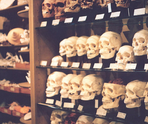 skull, photography, and skeleton image