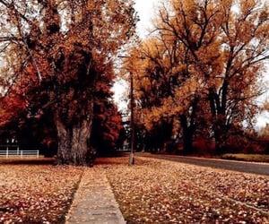autumn, road, and naturelover image