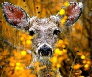 deer, animal, and autumn image