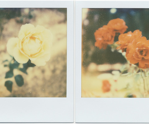 flower, polaroid, and photo image