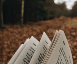 autumn, fall, and read image